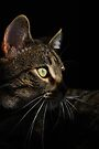 Shadowy Profile by jodi payne