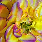Watercolor Rose by Robin Black