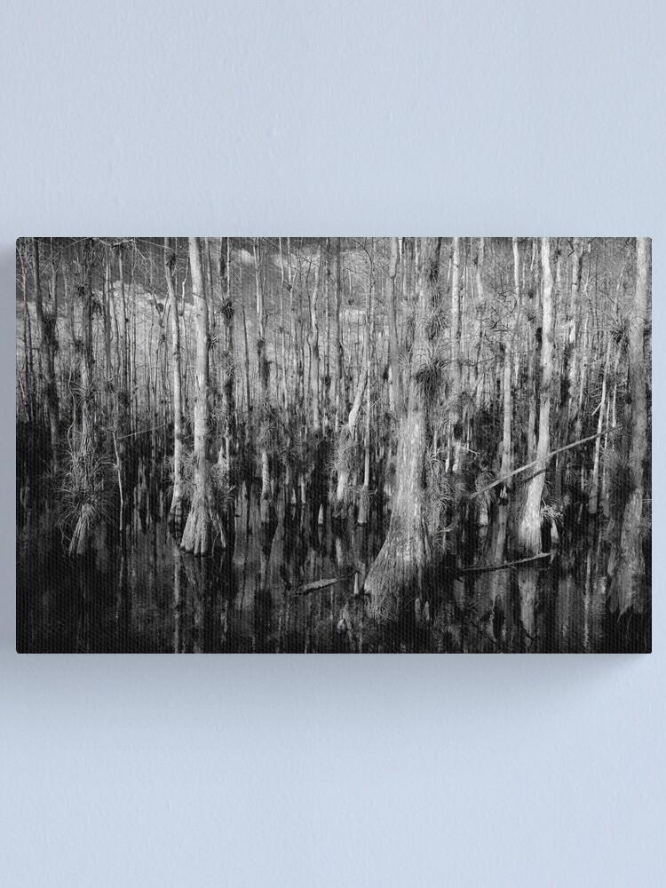 Alternate view of Cypress #4 Canvas Print