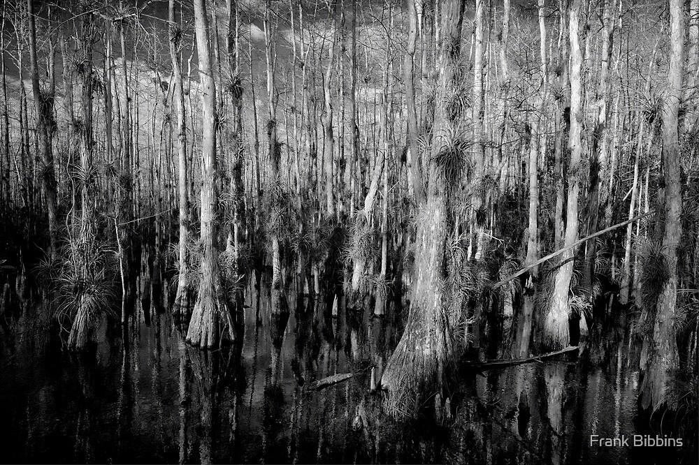 Cypress #4 by Frank Bibbins