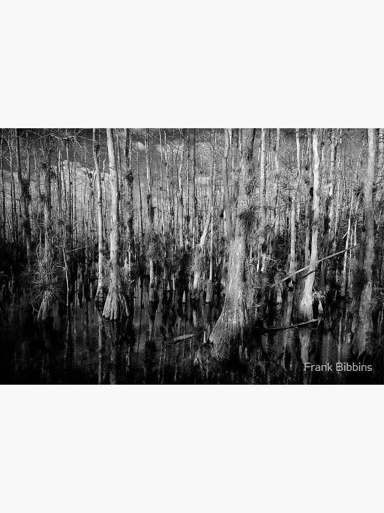 Cypress #4 by organicman2