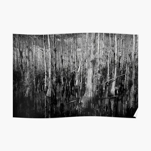 Cypress #4 Poster