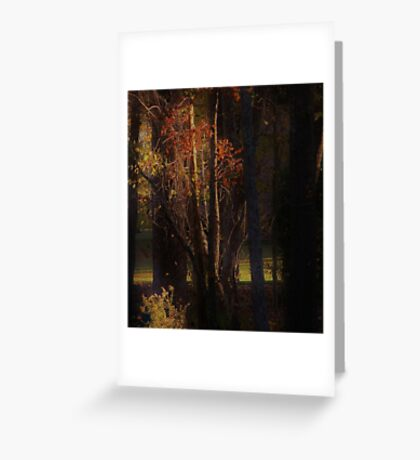 Through The Tree's  Greeting Card