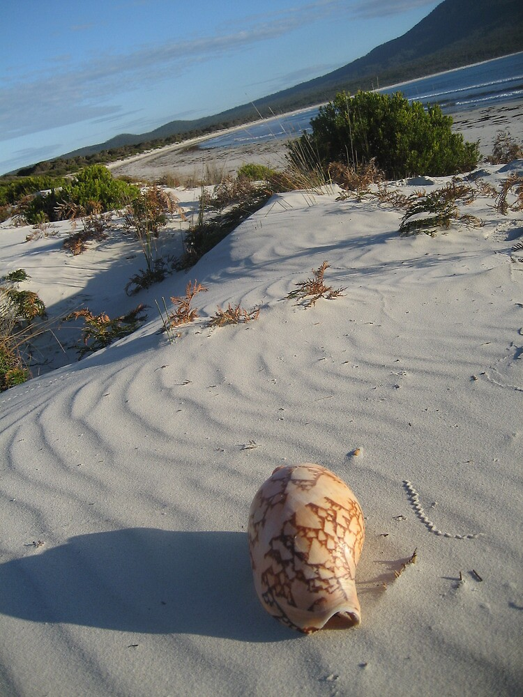 ocean beach, west coast by judips