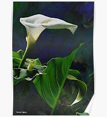 HC 29 Flowers Poster