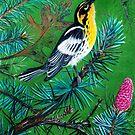 Blackburnian Warbler by Jedro