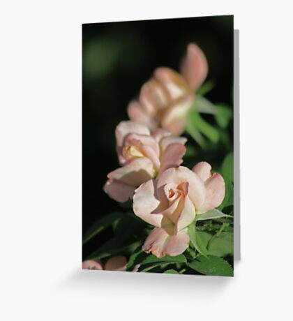 Row of Roses in Perfectly Pink Greeting Card