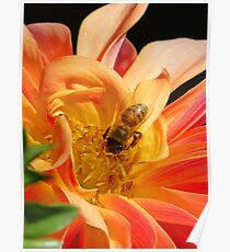 Golden Nectar Poster