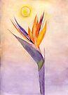 Bird of Paradise Flower by Anne Gitto