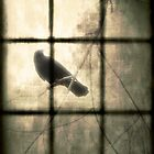 Bird Outside  by gothicolors