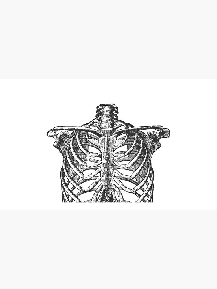 Anatomical Ribcage • Large Print • Goth Art by rike-mayer