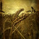 Wheat Field by Sarah Couzens