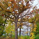 Autumn Colors  by Nora Caswell