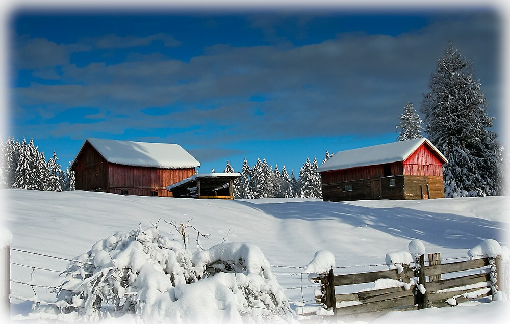 WINTER BARNS by Sandy Hill