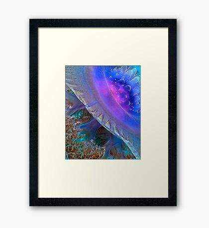 Crown Jellyfish Close Up Framed Print