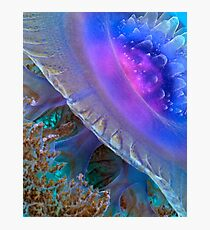Crown Jellyfish Close Up Photographic Print