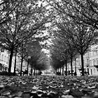 Fall by Manolya  F.