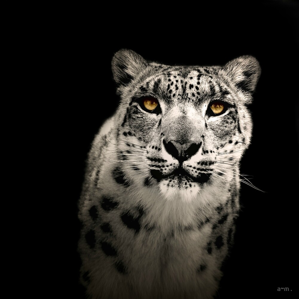~The Gaze II~ by a~m .
