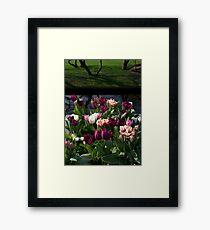 Tulips at Keukenhof Framed Print