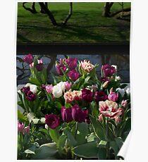 Tulips at Keukenhof Poster