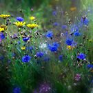 Cornflower Meadow by Ann Garrett