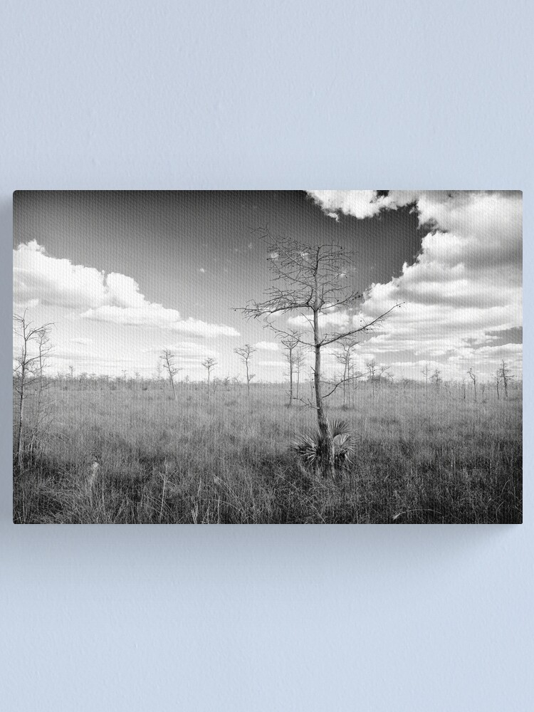 Alternate view of Pond Cypress, Corkscrew Swamp 2011 Canvas Print