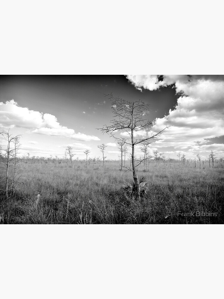 Pond Cypress, Corkscrew Swamp 2011 by organicman2