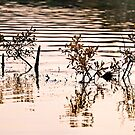 Submerged Branches by Gary Rayner