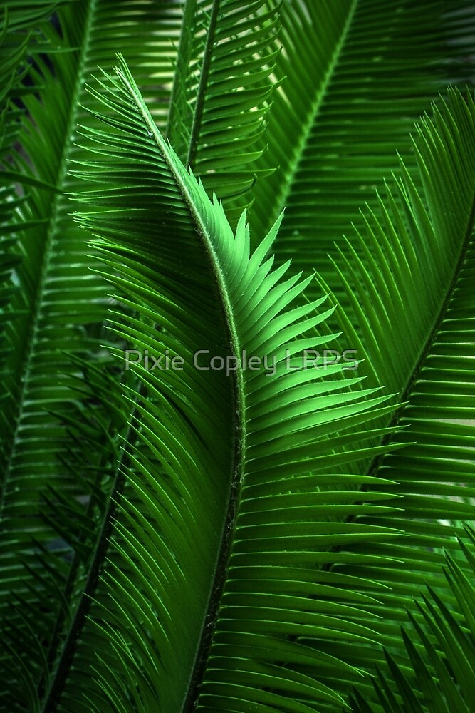 Abstract Green Leaves by Pixie Copley LRPS