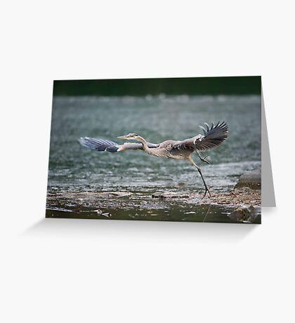 Heron Liftoff Greeting Card