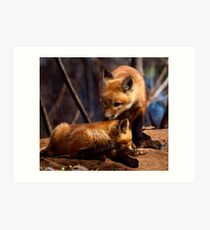 Kit Foxes Art Print
