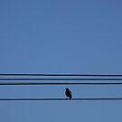 Bird On A Wire - Melbourne by BreeDanielle