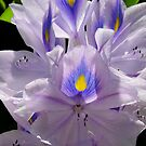 Water Hyacinth or Water Lily by WildestArt