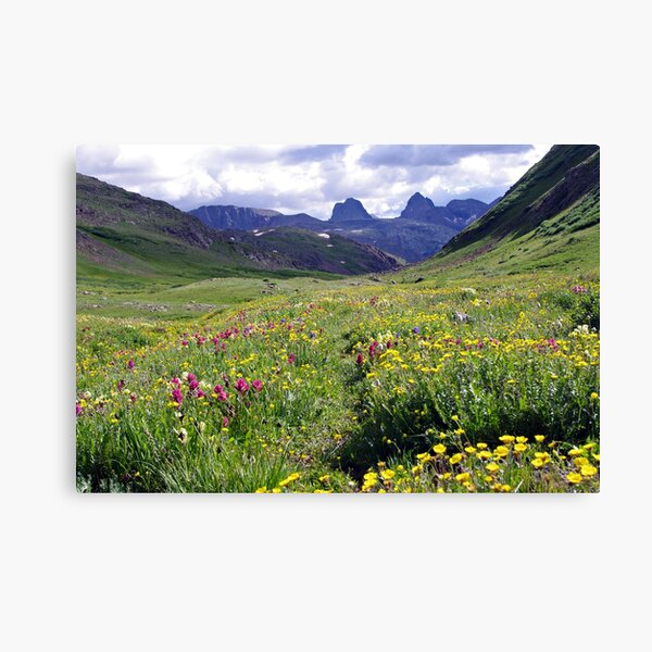 Wildflowers of the San Juans Canvas Print