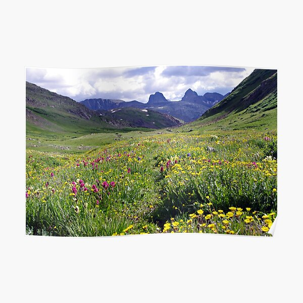 Wildflowers of the San Juans Poster