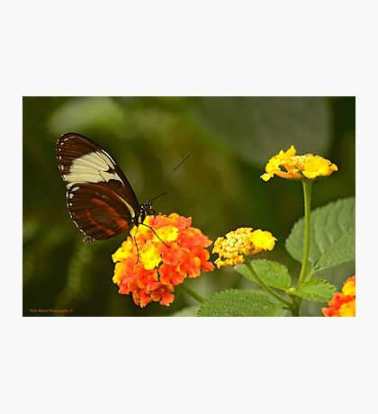 Wings Of Wonder Photographic Print