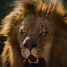Lion's Laugh  by vasu