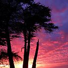 Cypress Sunset by Clancey Meyer-Gilbride