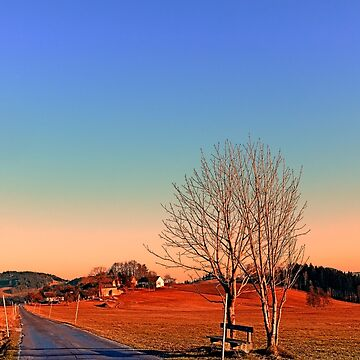 Country road, trees, a bench and a sundown | landscape photography by patrickjobst