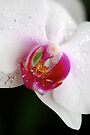 Heart of an Orchid by Extraordinary Light