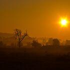Misty morn. by naranzaria