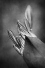 emerge by Anthony Mancuso