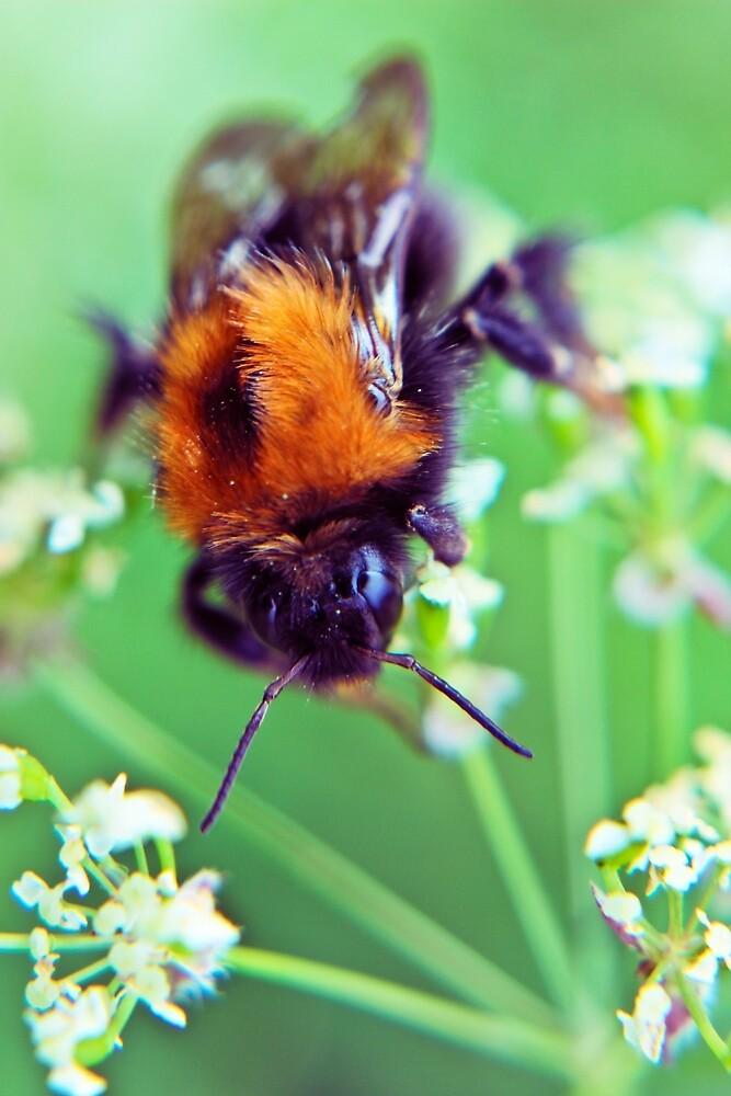 Bee Trouble by Vicki Field