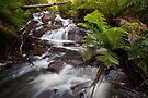 Cascades by Travis Easton
