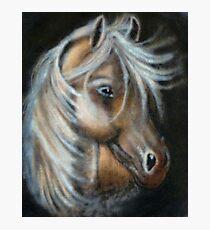Unique painted horse Fotodruck