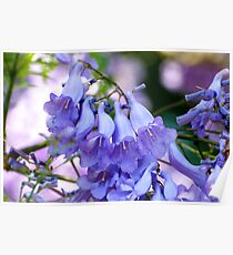The last of the Jacaranda Blossoms Poster