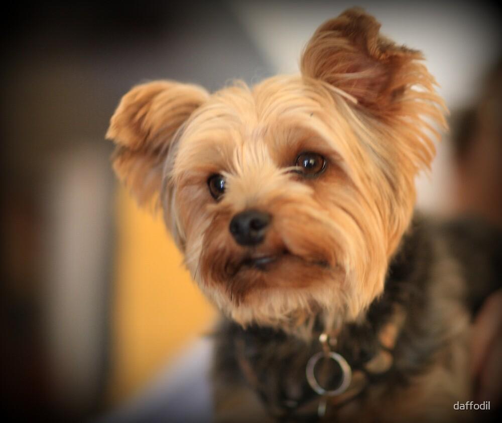 Adorable dog by daffodil