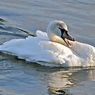 Swan Song by dilouise