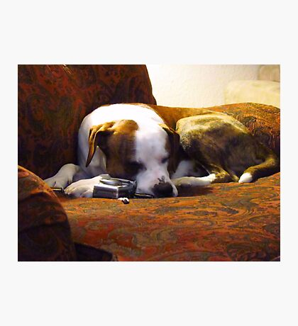 Taking a Snooze after long days work~ Photographic Print