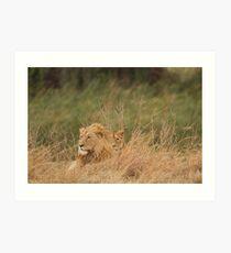 Lion Pair at rest Art Print